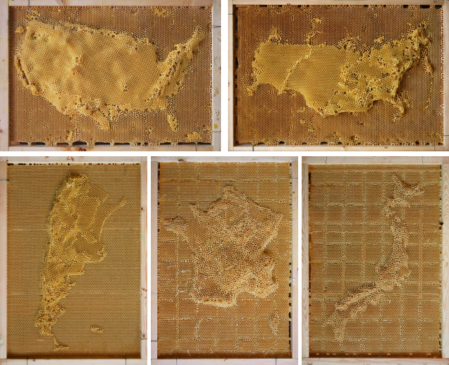 Ren Ri's honeycomb depictions of the United States, Russia, Argentina, France, and Japan
